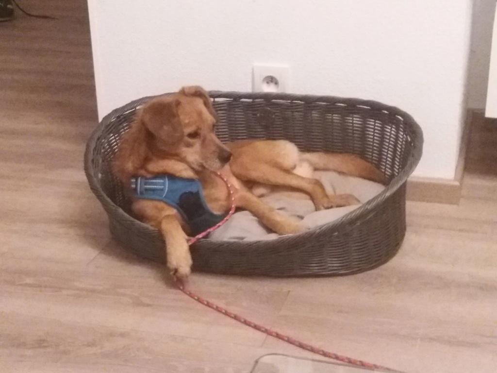Cosmo - mâle - fourrière de Târgu Frumos - Réservé adoption (68) 79434410