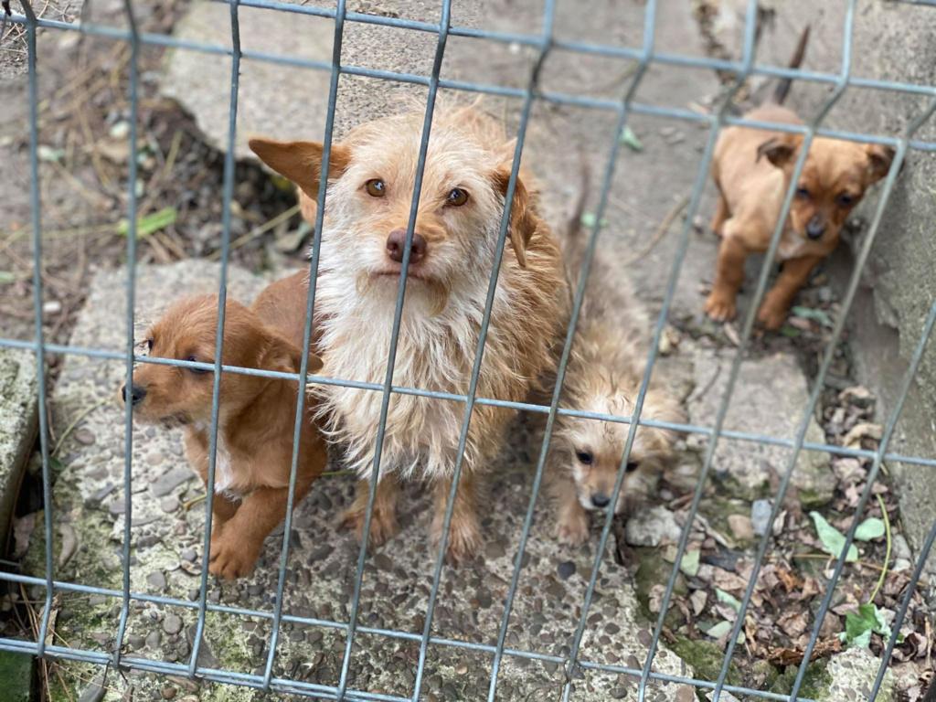 Zumia- femelle- fourrière de Târgu Frumos - réservée adoption (88) 79530311