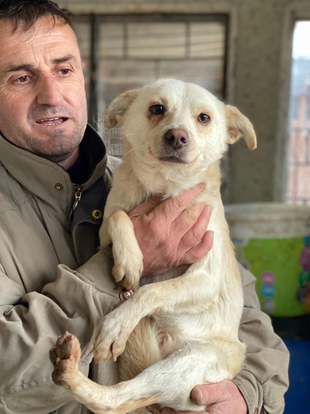 Oxford- mâle- fourrière de Târgu Frumos 79585110