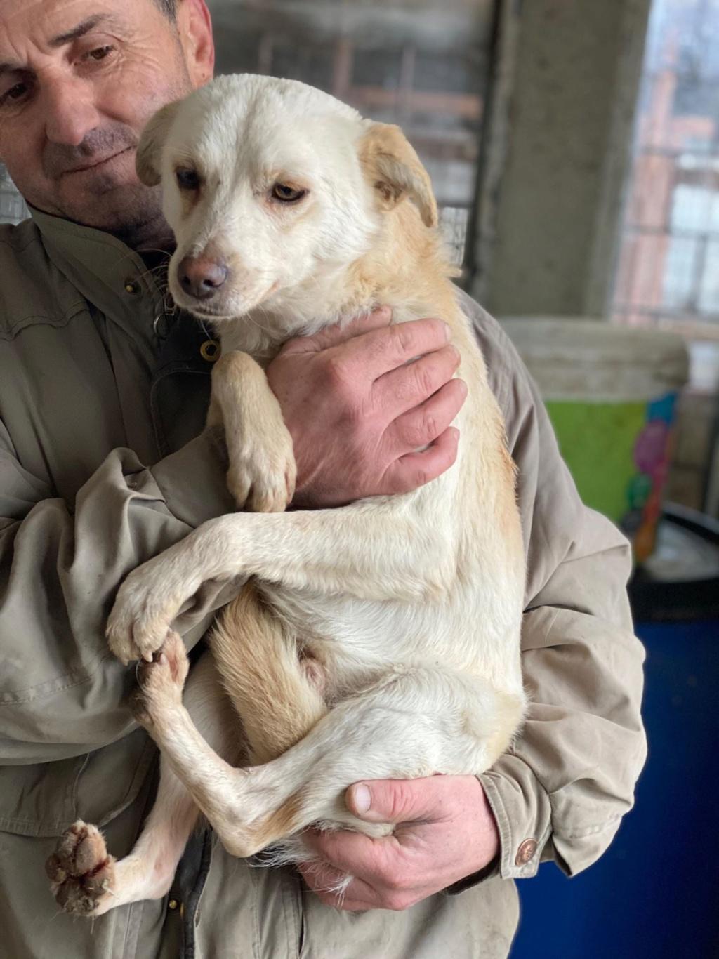Oxford- mâle- fourrière de Târgu Frumos 79701210