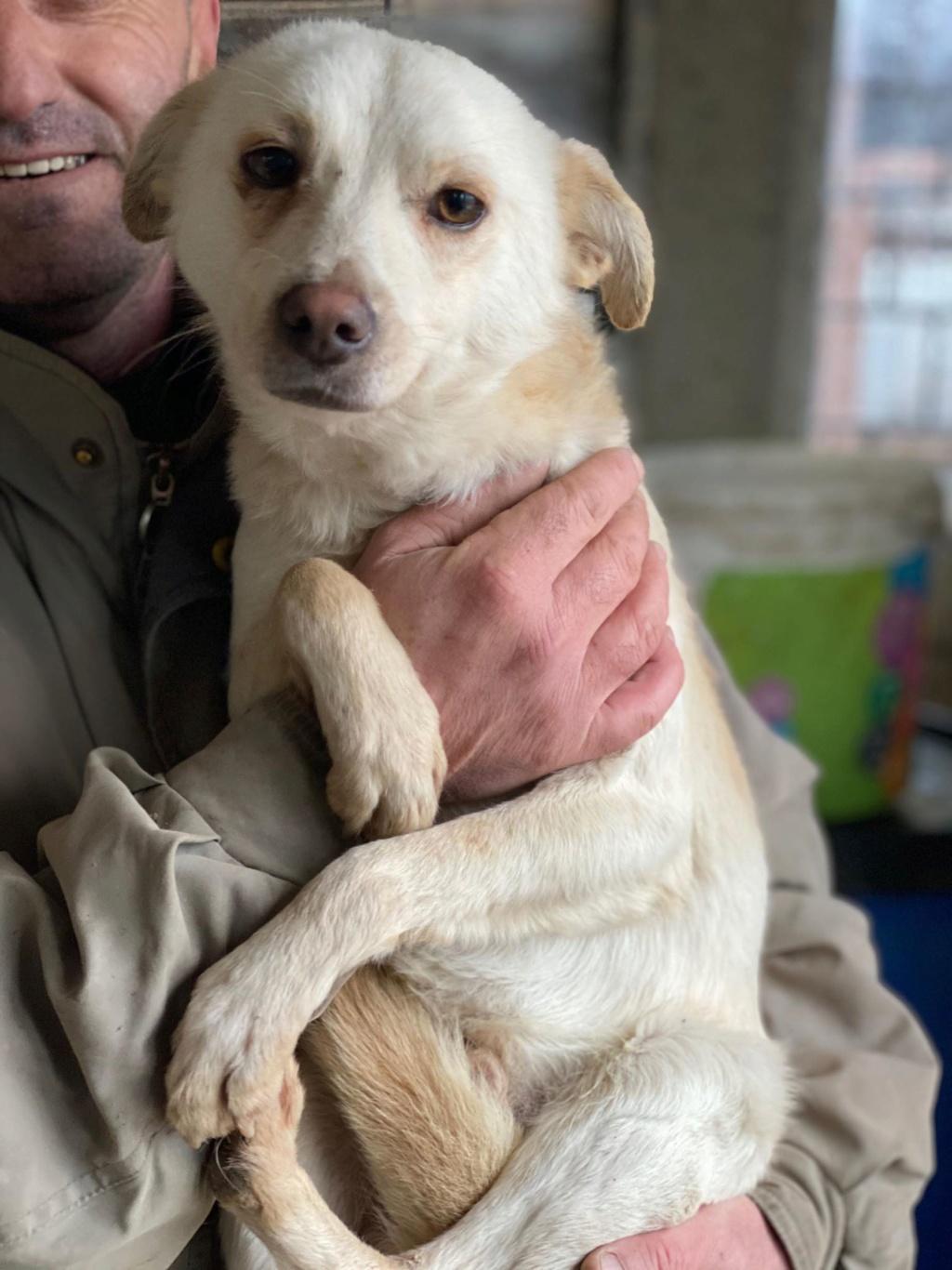 Oxford- mâle- fourrière de Târgu Frumos 79751610