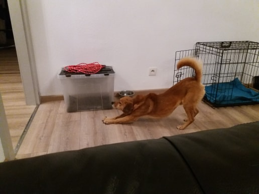 Cosmo - mâle - fourrière de Târgu Frumos - Réservé adoption (68) 79777110