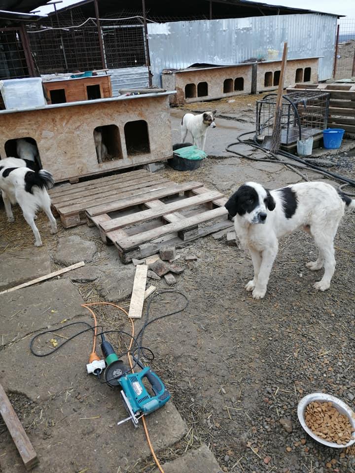 Onyx- mâle- fourrière de Târgu Frumos  adopté via andreea 79904710
