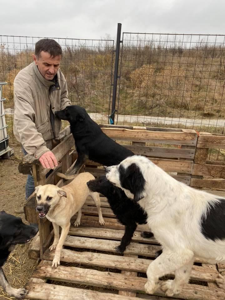 Onyx- mâle- fourrière de Târgu Frumos  adopté via andreea 79911110