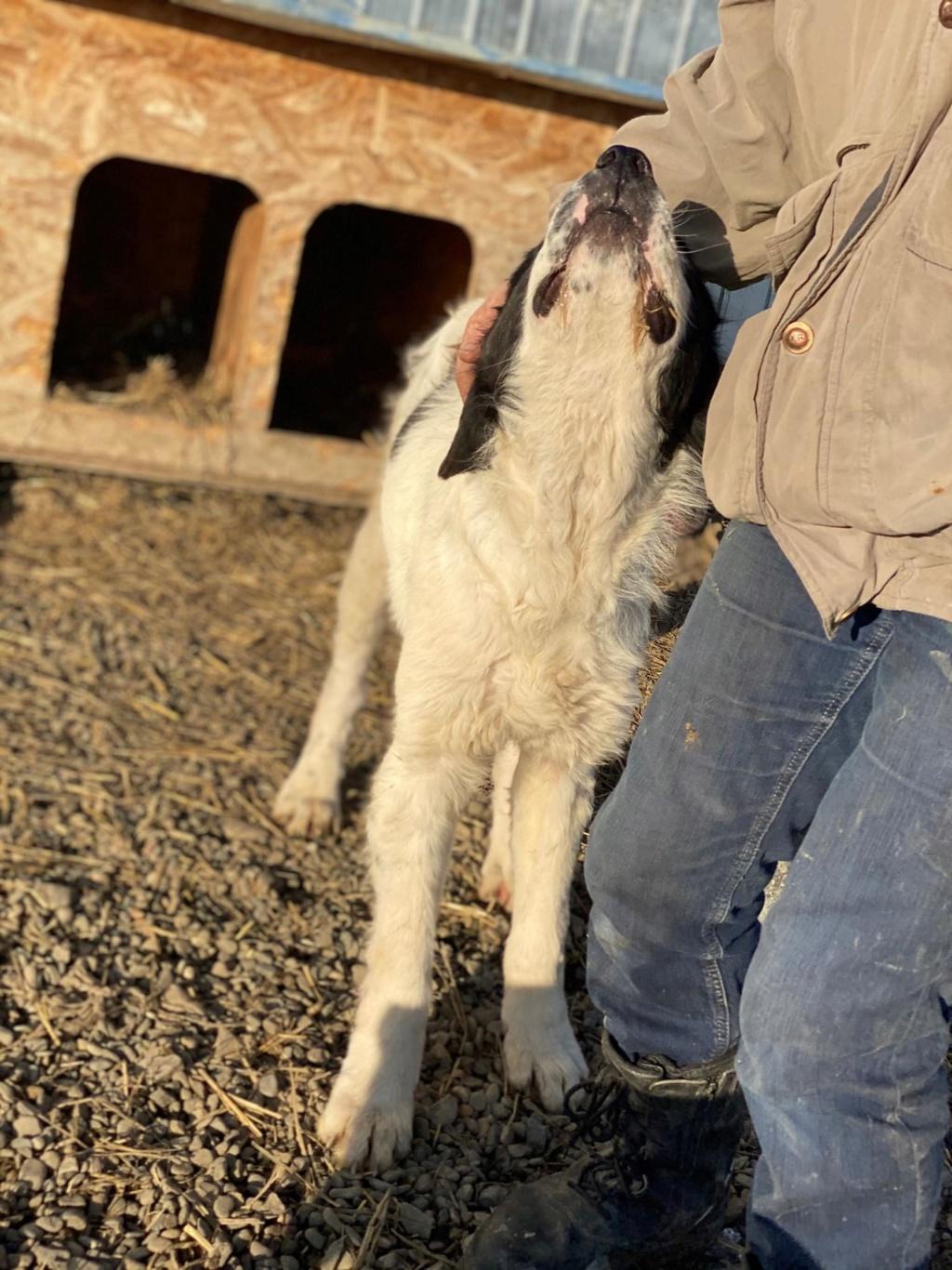 Onyx- mâle- fourrière de Târgu Frumos  adopté via andreea 79944910