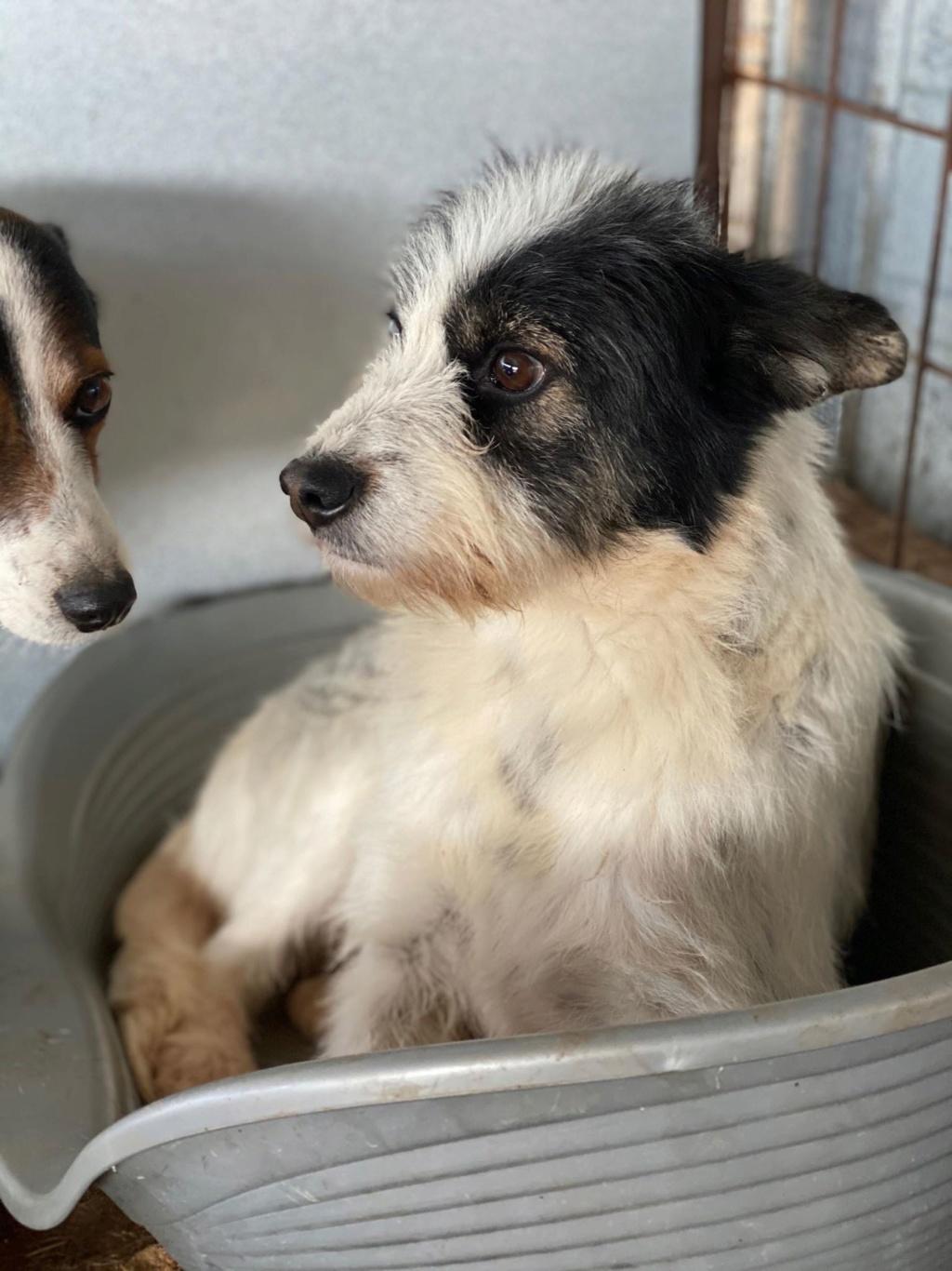 Betty-femelle- fourrière de Târgu Frumos - Adoptée via Andreea  80013910