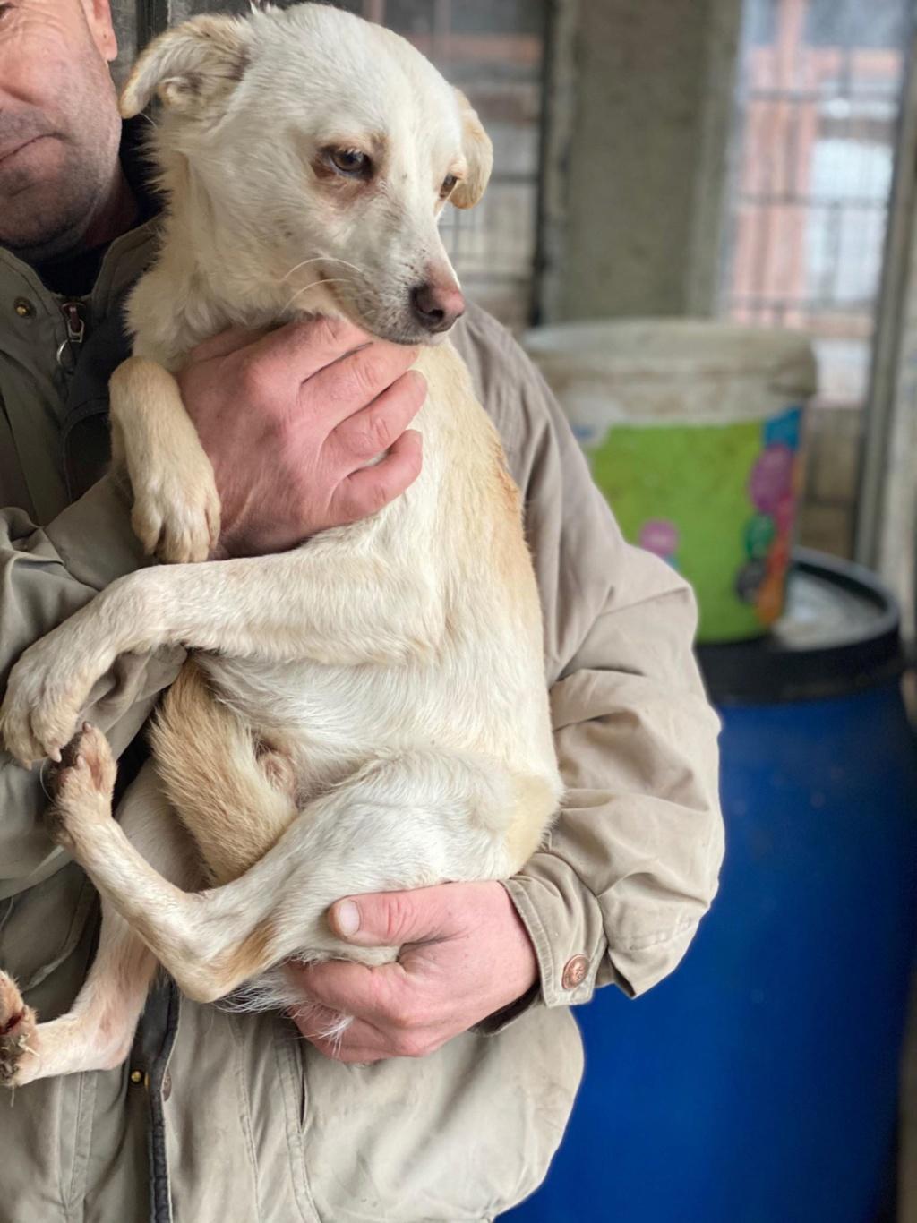 Oxford- mâle- fourrière de Târgu Frumos 80273510