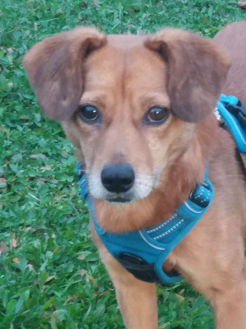 Cosmo - mâle - fourrière de Târgu Frumos - Réservé adoption (68) 80315110
