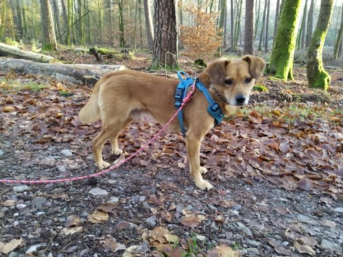 Cosmo - mâle - fourrière de Târgu Frumos - Réservé adoption (68) 80389310