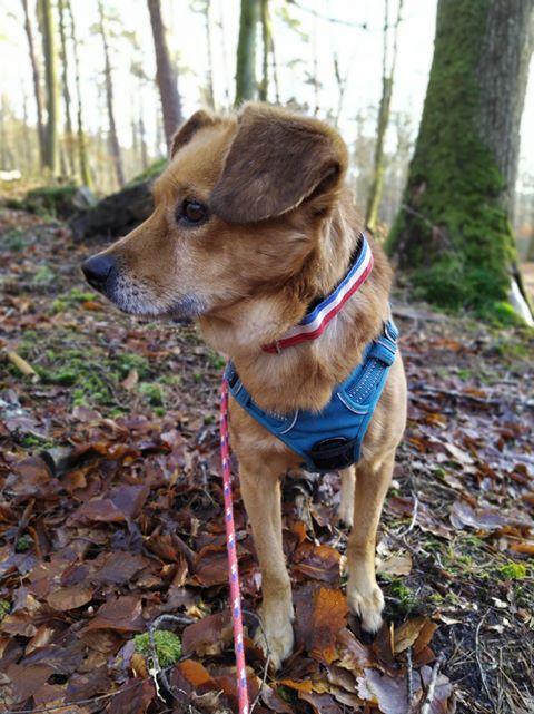 Cosmo - mâle - fourrière de Târgu Frumos - Réservé adoption (68) 80396510