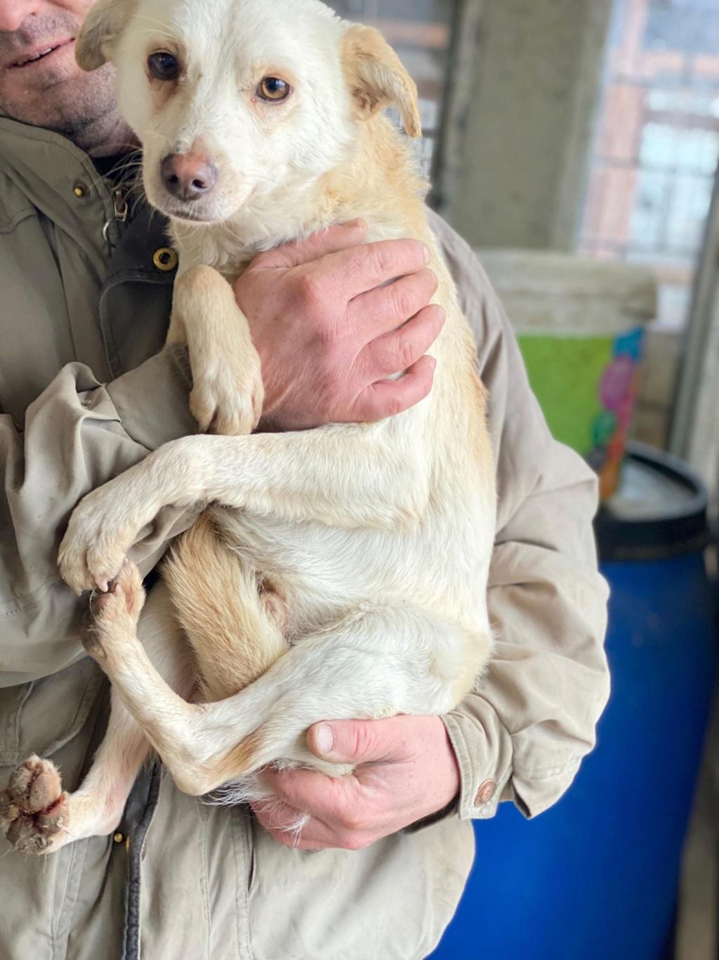 Oxford- mâle- fourrière de Târgu Frumos 80569610