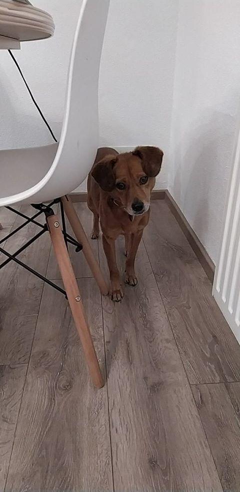 Cosmo - mâle - fourrière de Târgu Frumos - Réservé adoption (68) 80759110