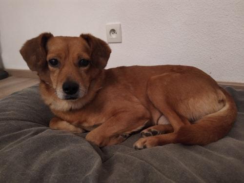 Cosmo - mâle - fourrière de Târgu Frumos - Réservé adoption (68) 80977010