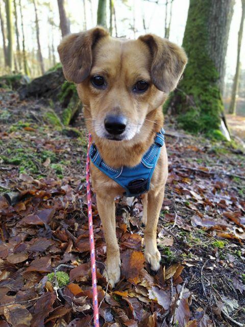 Cosmo - mâle - fourrière de Târgu Frumos - Réservé adoption (68) 81430610
