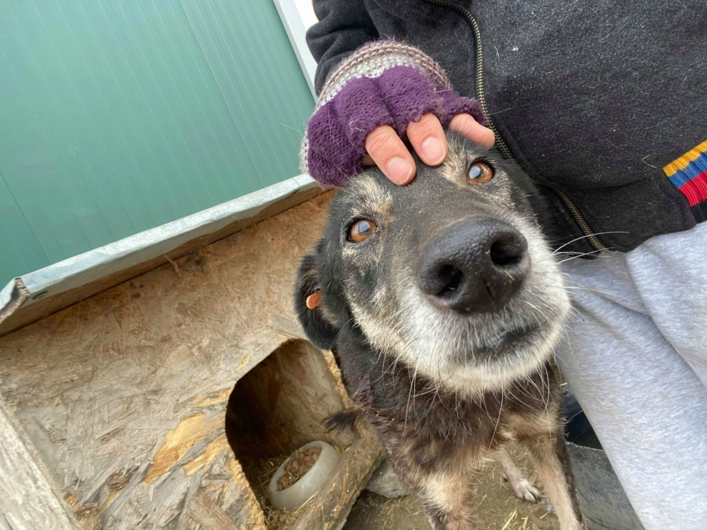 Neptune - mâle - refuge de Târgu Frumos - Adopté par sa famille d'accueil 82125410