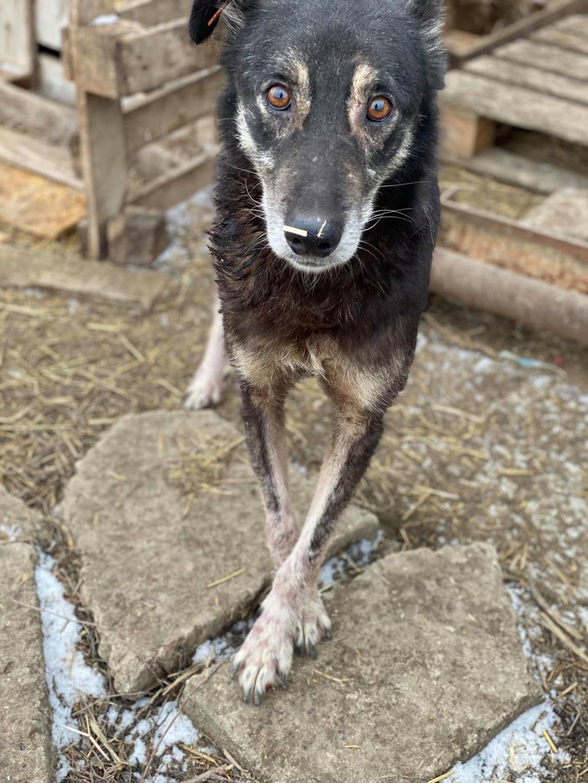Neptune - mâle - refuge de Târgu Frumos - Adopté par sa famille d'accueil 82414311