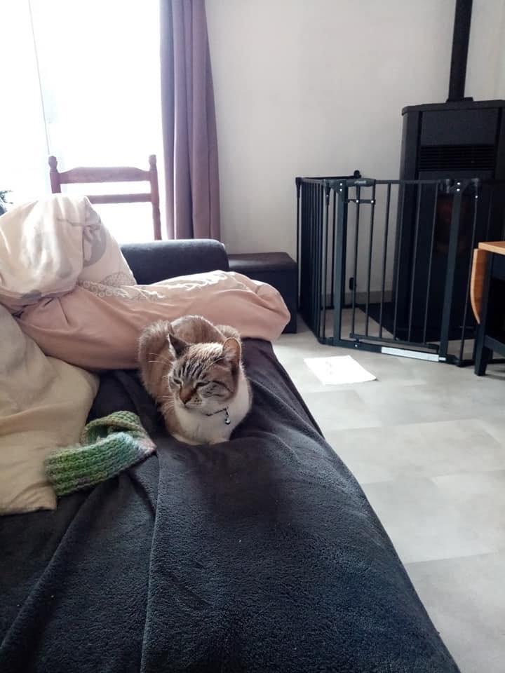 Fiona -  femelle -  refude d'Arad - réservée adoption (70)  82744410