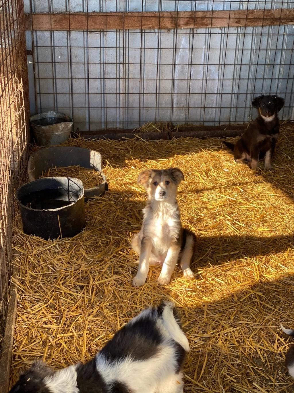 Rexx- mâle- fourrière de Târgu Frumos - réservé adoption (67) 84487810