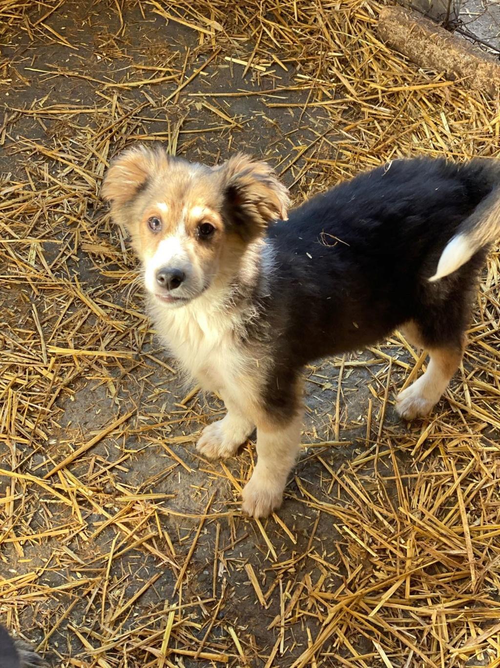 Rexx- mâle- fourrière de Târgu Frumos - réservé adoption (67) 85049210