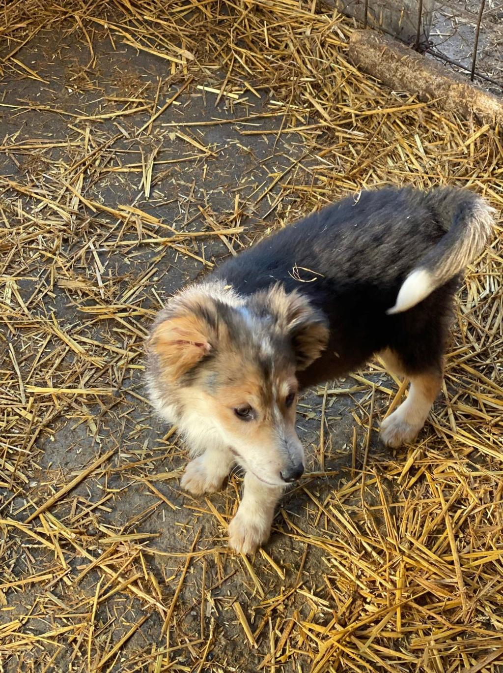 Rexx- mâle- fourrière de Târgu Frumos - réservé adoption (67) 85076310