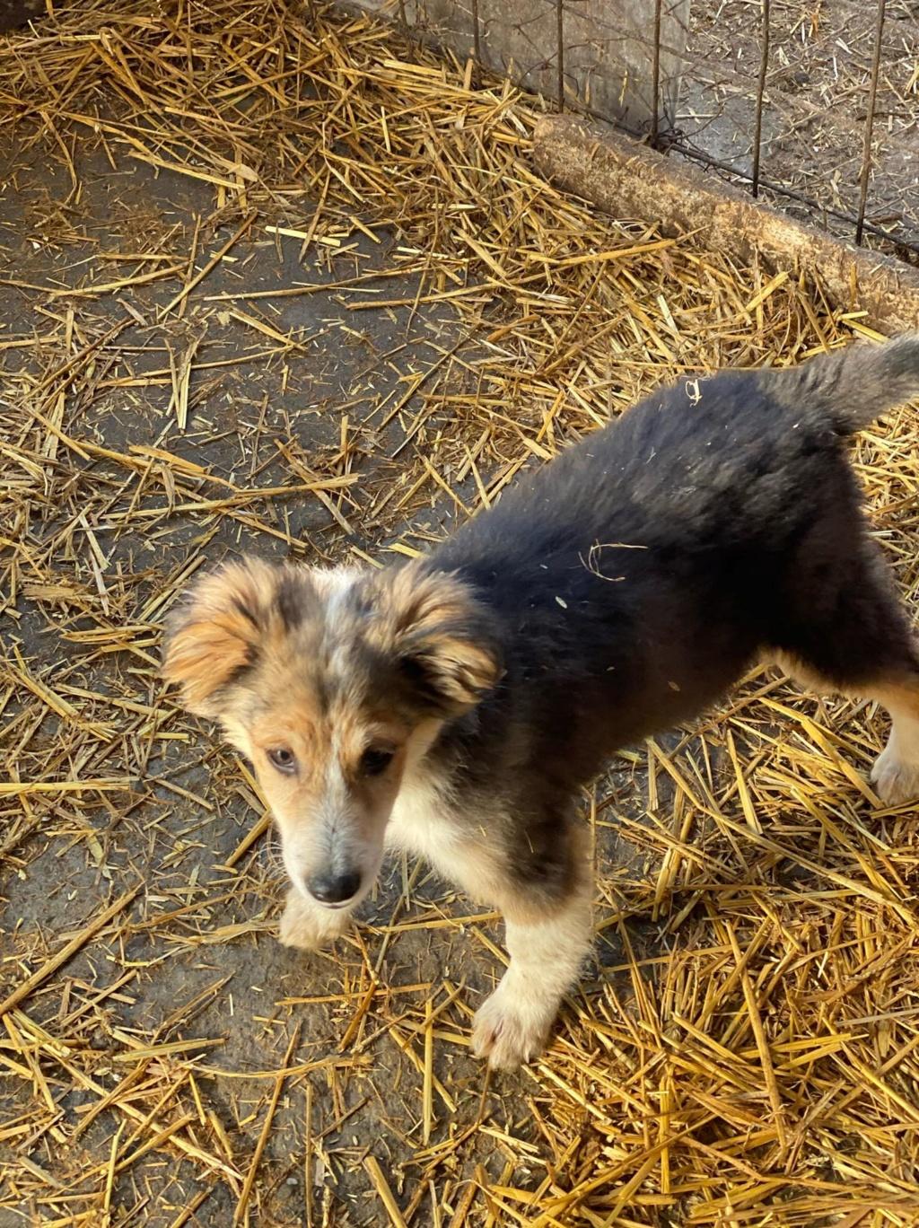 Rexx- mâle- fourrière de Târgu Frumos - réservé adoption (67) 85164010