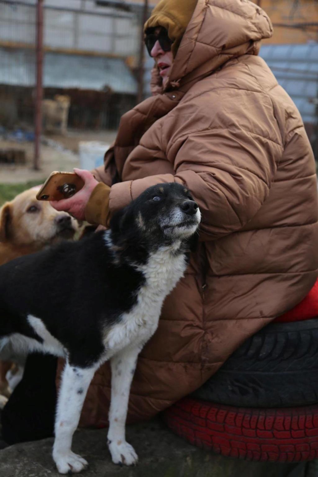 Fetita - femelle - fourrière de Arad - adoptée via Arad 87413510