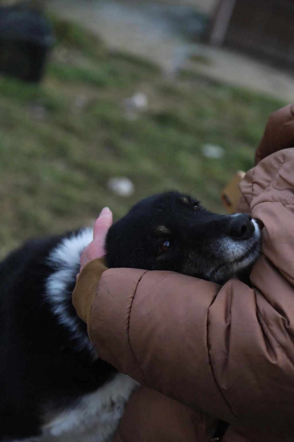 Fetita - femelle - fourrière de Arad - adoptée via Arad 87794310