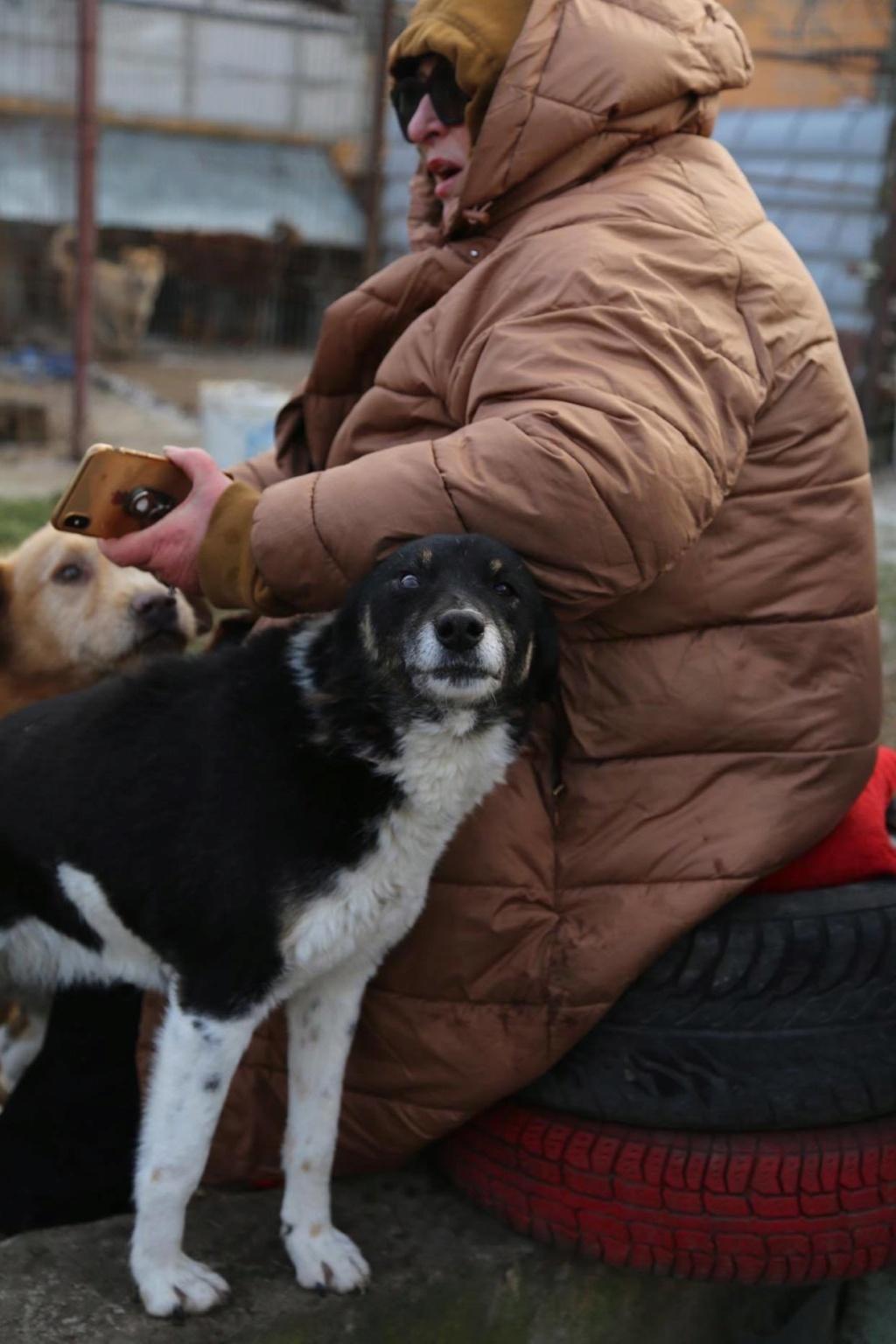 Fetita - femelle - fourrière de Arad - adoptée via Arad 87805810