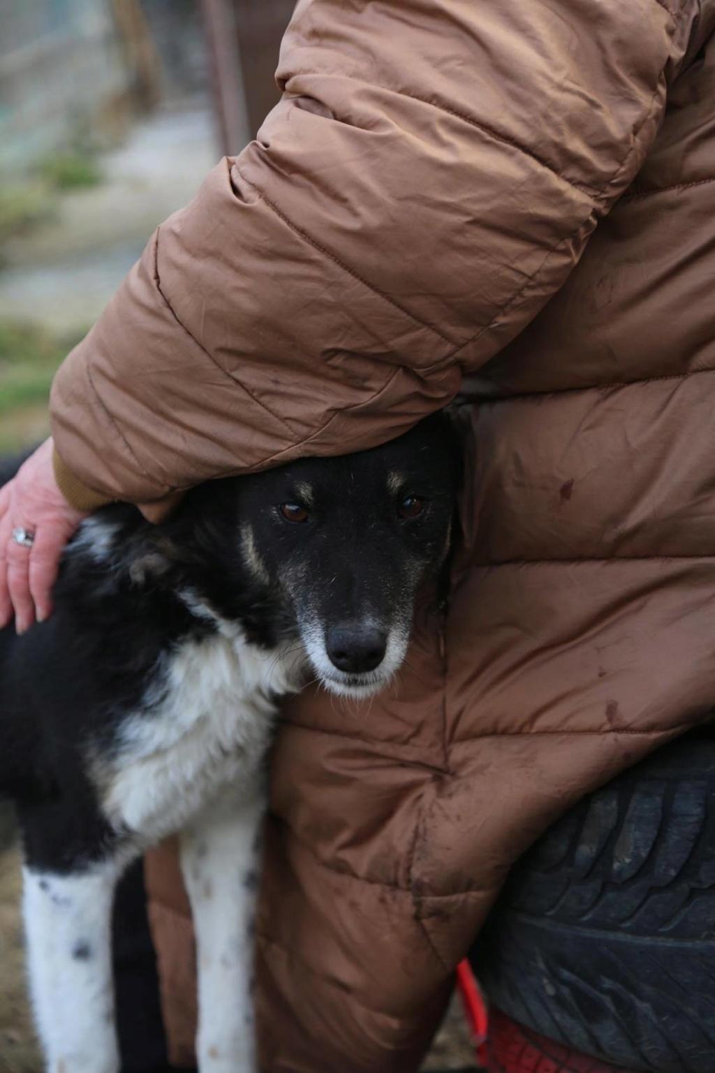 Fetita - femelle - fourrière de Arad - adoptée via Arad 87868910