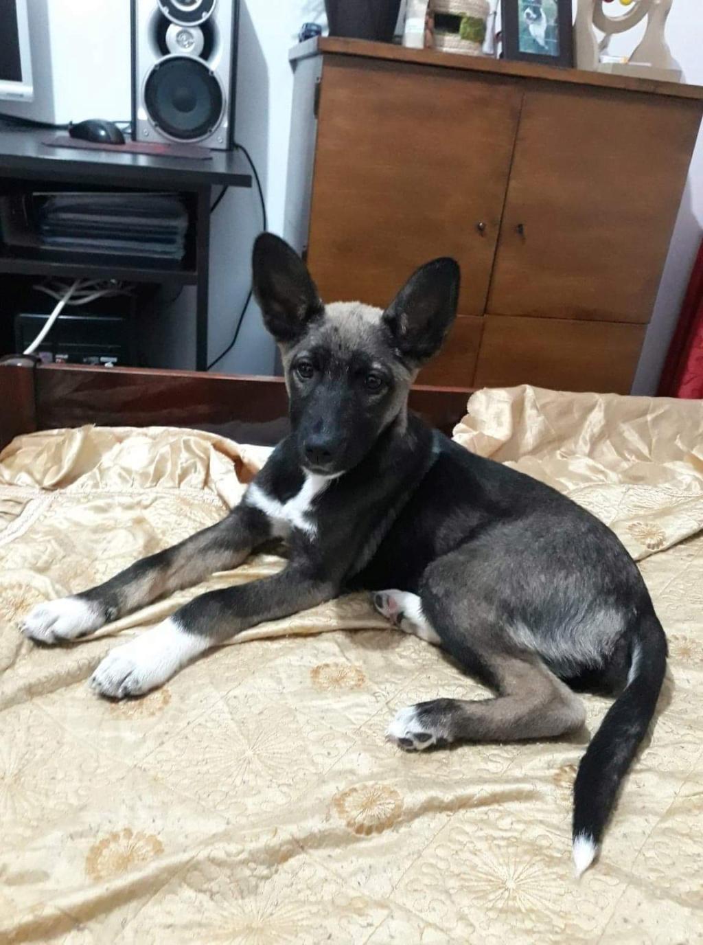 Archie- mâle- dans une famille d'accueil près de Târgu Frumos - adopté via Andréea 8c952c10