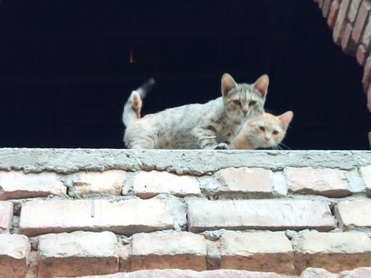 Mao (ex-Pixel) - Mâle chaton - en FA dans le 67 90d1fb10
