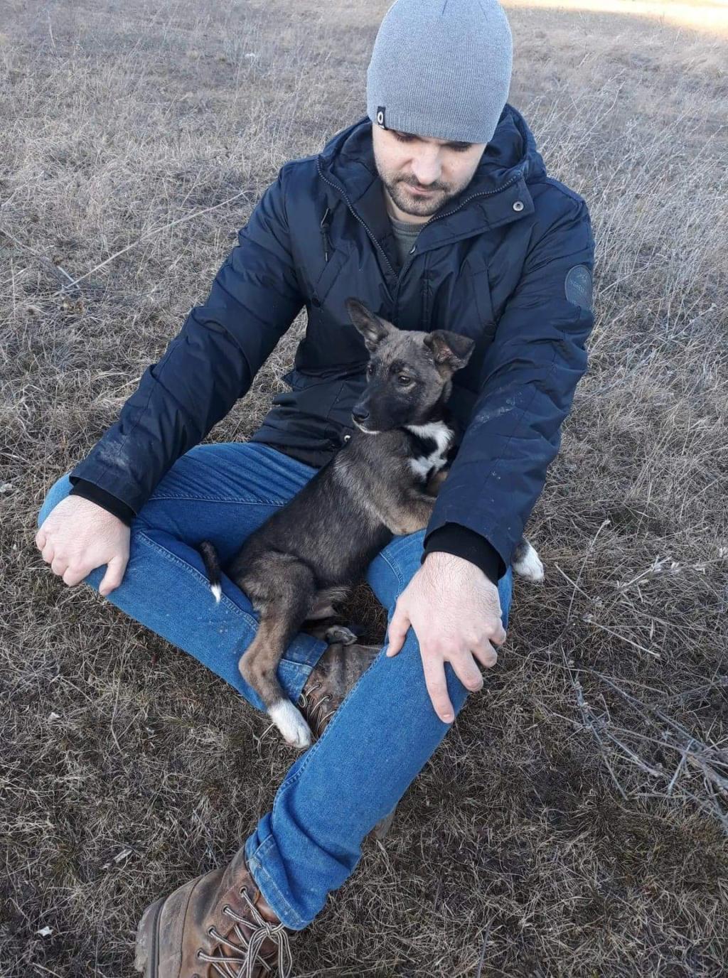 Archie- mâle- dans une famille d'accueil près de Târgu Frumos - sera en Famille d'Accueil dans le 67 en mars 98ae5c10