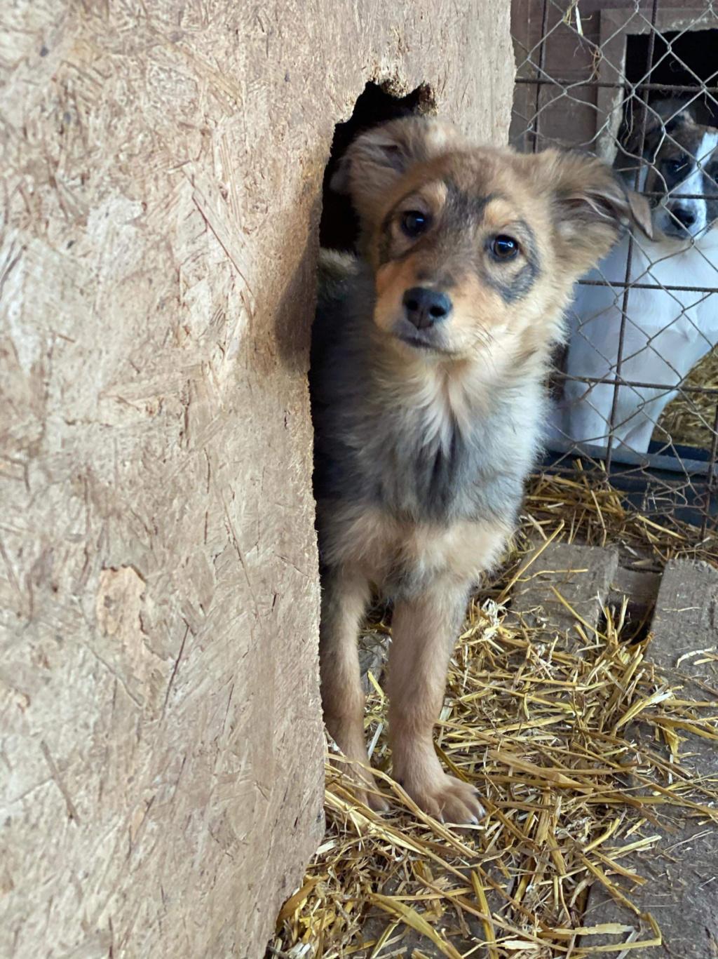 Lova- femelle- fourrière de Târgu Frumos - En Famille d'Accueil dans le 59 Acc5b810