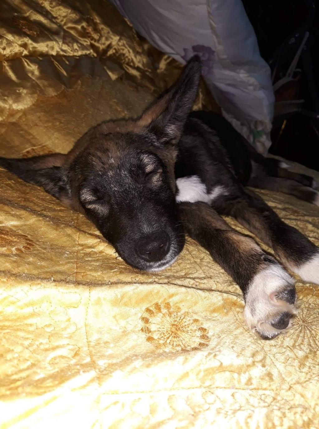 Archie- mâle- dans une famille d'accueil près de Târgu Frumos - sera en Famille d'Accueil dans le 67 en mars Ad0a8d10