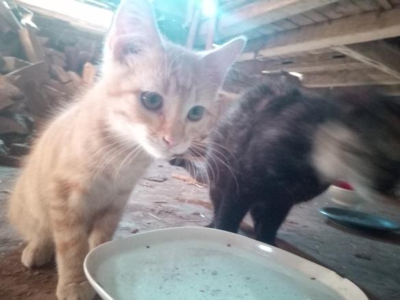 Mao (ex-Pixel) - Mâle chaton - en FA dans le 67 Af156110