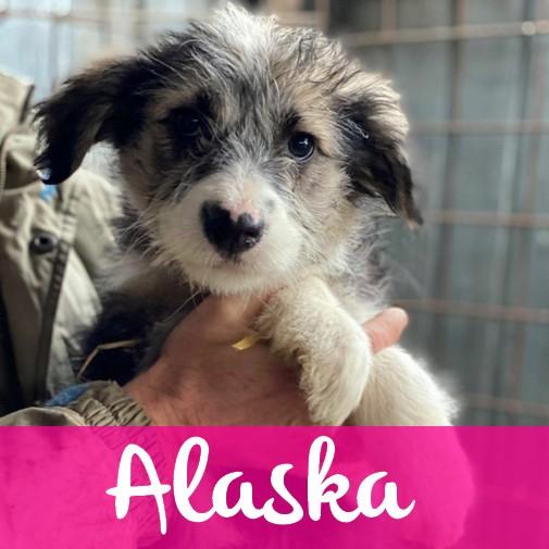 AlaskaF