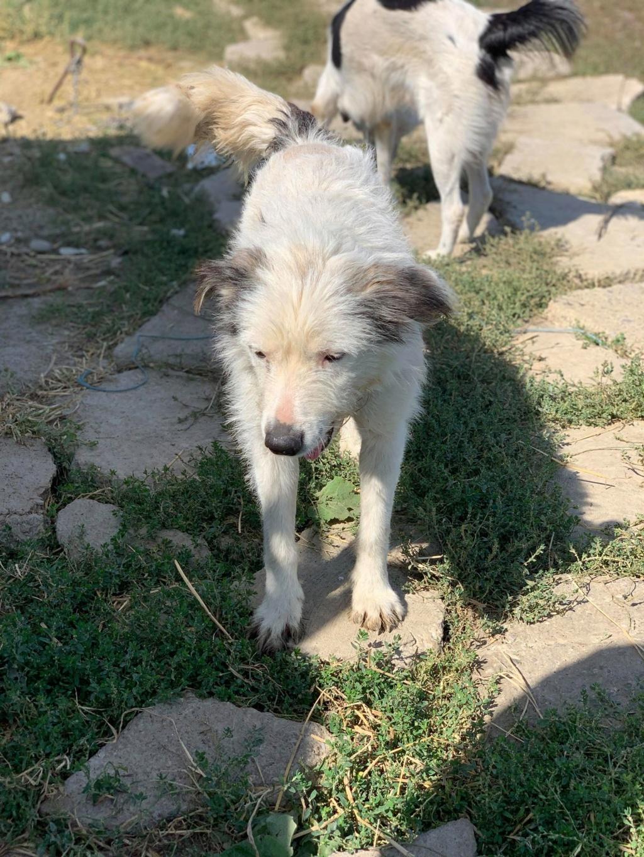 Alba -femelle- fourrière de Târgu Frumos - adoptée en Hollande Alba_310
