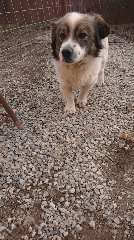 Alistar- mâle- refuge d'Arad - réservé adoption (67) Alista15