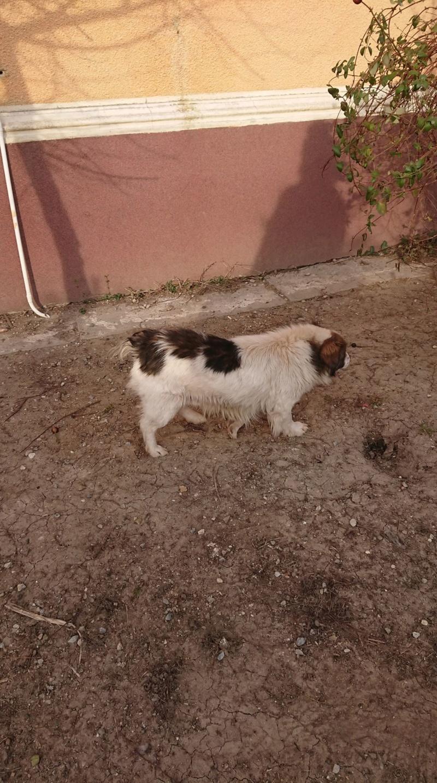 Alistar- mâle- refuge d'Arad - réservé adoption (67) Alista16