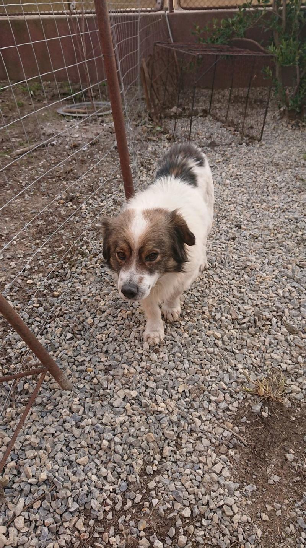 Alistar- mâle- refuge d'Arad - réservé adoption (67) Alista17