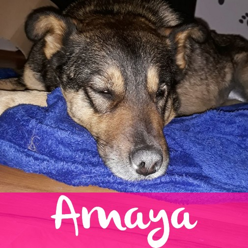AmayaF