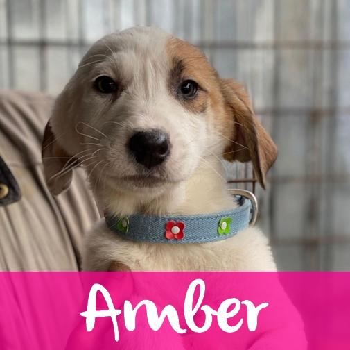 AmberF