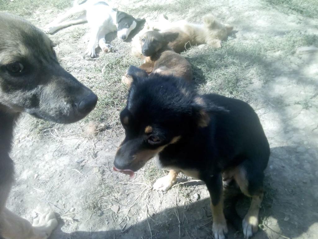 Ambre- femelle- fourrière de Târgu Frumos - réservée adoption (67) rapatriement novembre Ambre_10