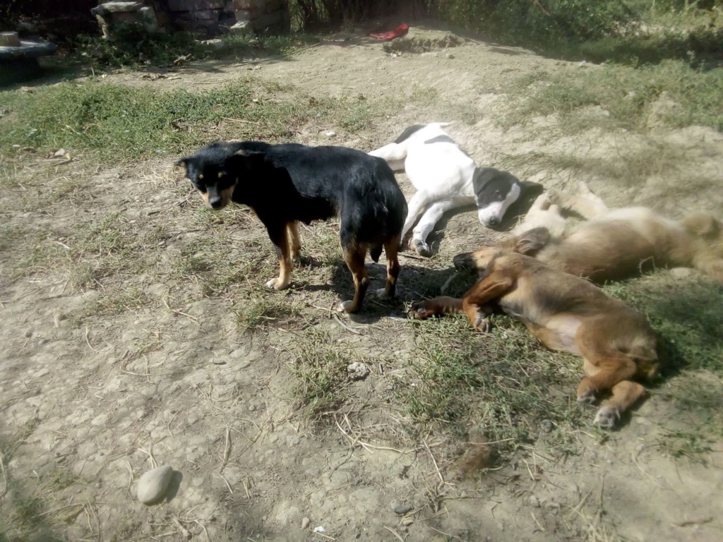 Ambre- femelle- fourrière de Târgu Frumos - réservée adoption (67) rapatriement novembre Ambre_13