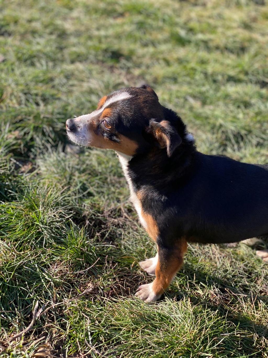 Angie- femelle- fourrière de Târgu Frumos adoptée via andreea Angie_12