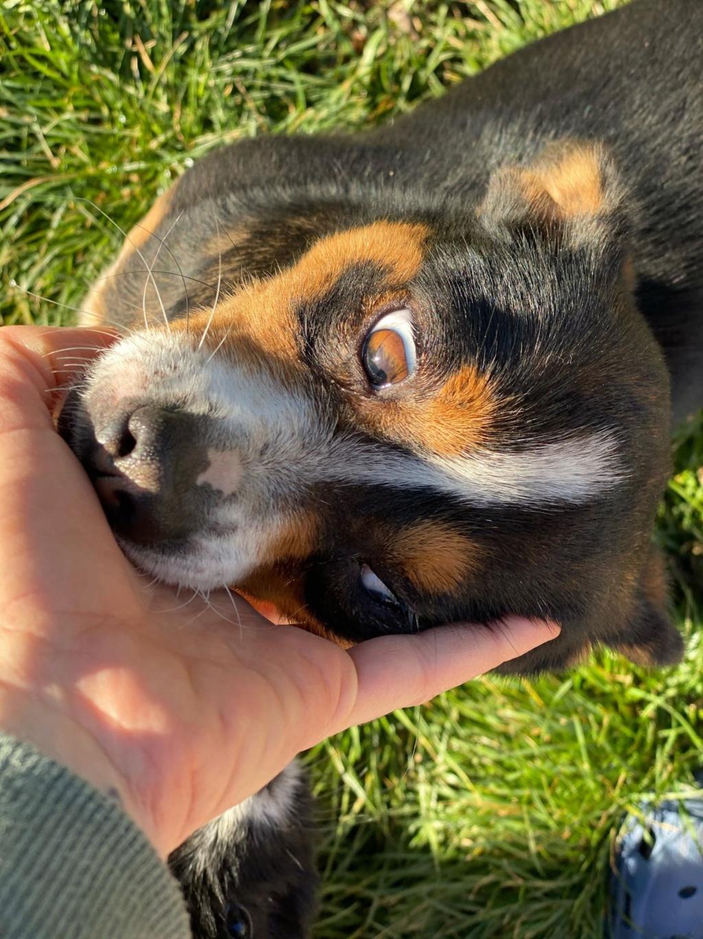 Angie- femelle- fourrière de Târgu Frumos adoptée via andreea Angie_17