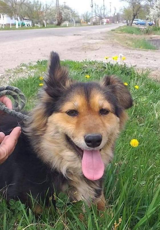Anke - chienne femelle- refuge d'Arad - en famille d'accueil dans le 68 Anke_110