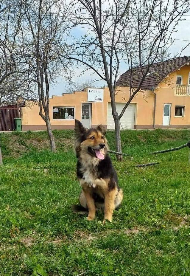 Anke - chienne femelle- refuge d'Arad - en famille d'accueil dans le 68 Anke_115