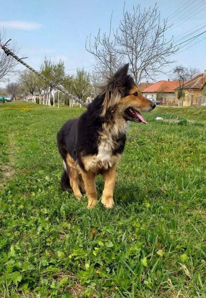 Anke - chienne femelle- refuge d'Arad - en famille d'accueil dans le 68 Anke_116