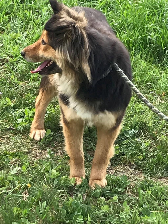 Anke - chienne femelle- refuge d'Arad - en famille d'accueil dans le 68 Anke_217